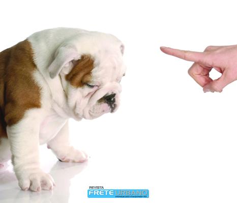 Meu animal: Cão treinado, cão sociável!