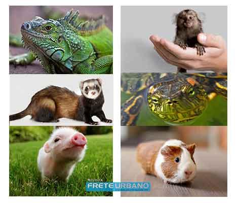 Coluna meu animal: Pets exóticos que podemos ter em casa