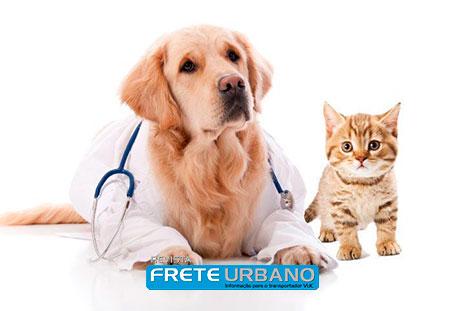 Coluna Meu Animal: Planos de saúde para pets