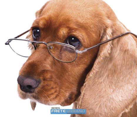 Meu animal: Meu pet é um idoso, e agora?