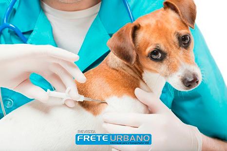 Meu animal: Microchips em cães e gatos