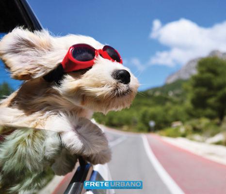 Meu animal: Na estrada com o seu pet