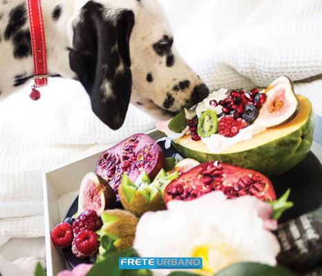 Meu animal: Frutas, verduras e legumes, pode ou não?