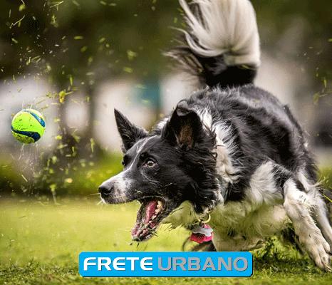 Coluna meu animal: Atividades e esportes caninos
